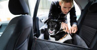 Czy w wypożyczanych samochodach można przewozić zwierzęta?